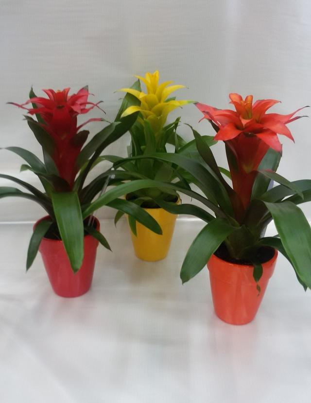 Al giardino di claudia e lara for Nomi piante da giardino